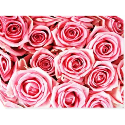 Pink roses -  print