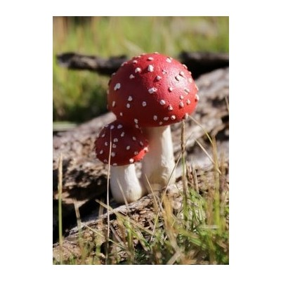 Fairy Garden - Mushrooms Red with White Spots - Small